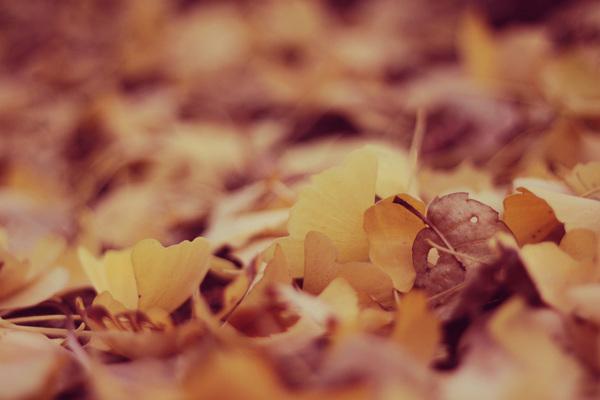 落葉清掃サムネイル